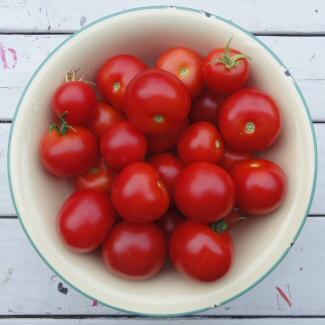 2016-9294-tomaat